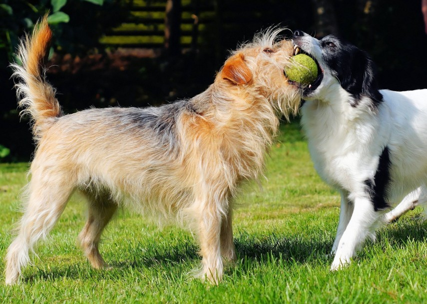 dogs-405419_1280