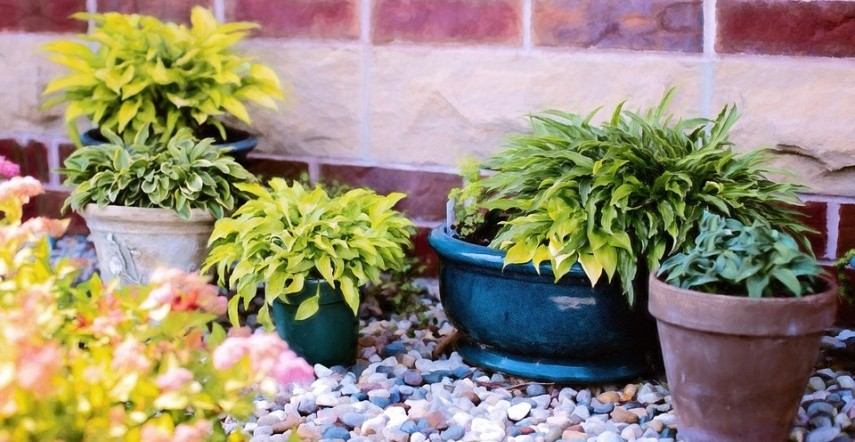 Find About 7 Plants That Keep Your Home Mosquito Free Makaaniq Com