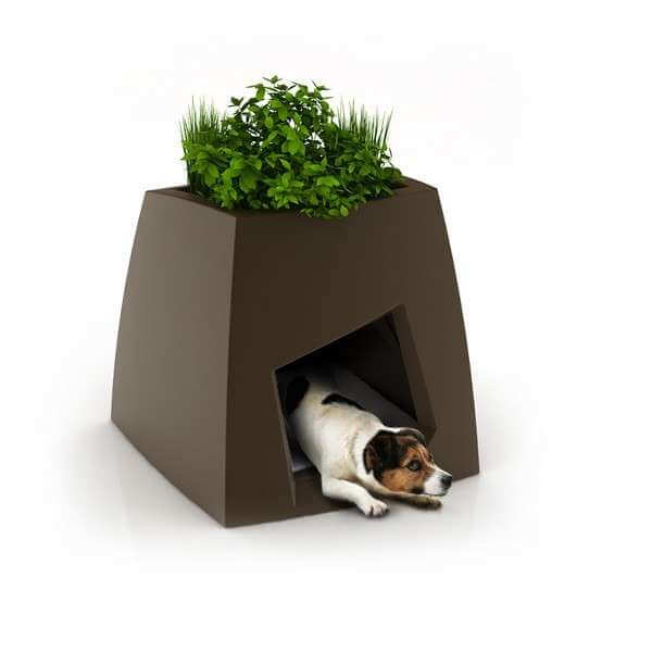 cat-plants