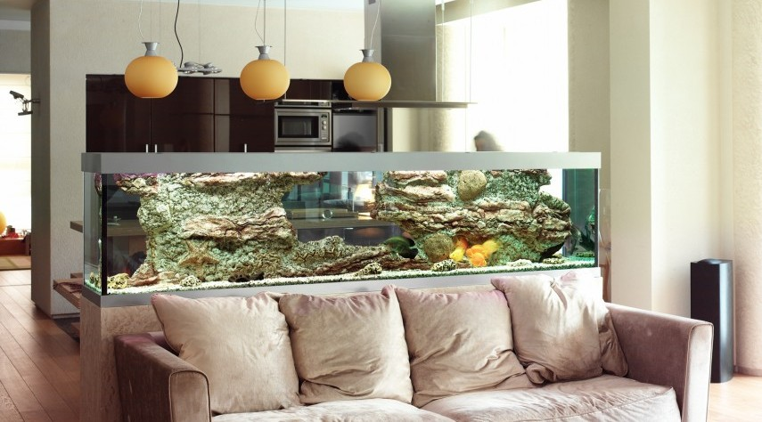 Feng Shui Tips For Fish Tanks Hallway Aquarium Home Design on home conservatory designs, home walkway designs, home entryway designs, home reception designs, home loft designs, home great room designs, home front designs, home staircase designs, home stairway designs, home beach designs, home wall designs, home garden designs, home dining room designs, home mud room designs, home glass designs, home floor designs, home school designs, home study designs, home building designs, home foyer designs,