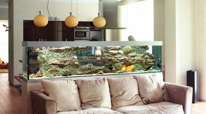 Feng Shui Tips For Fish Tanks