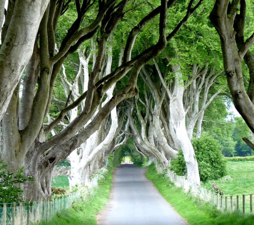 Dark Hedge, Ireland