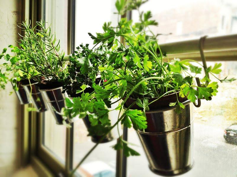plants (pinterest)