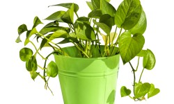 Home Sutra: Where Should You Keep That Money Plant?