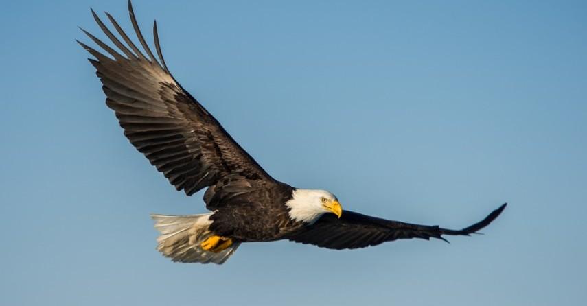 Feng Shui Tips For Placing Eagle Symbol