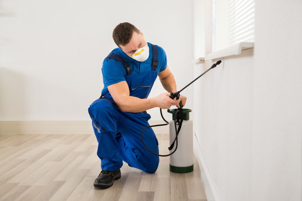 Here's Why You Must Consider Professional Pest Control Services
